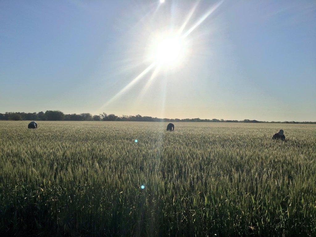 The Economic Viability of Winter Wheat