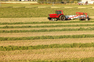 Extension to host webinar on forage production risk on Thursday