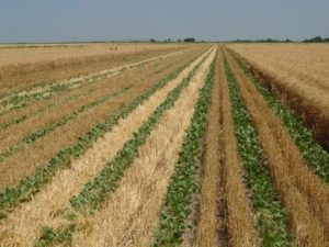 Trading Bits & Bytes Looks at Moving Forward with Corn & Soybeans