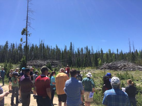 RRN/Tour looking at dead trees from the beetle outbreak in the experimental forest near Fraser.