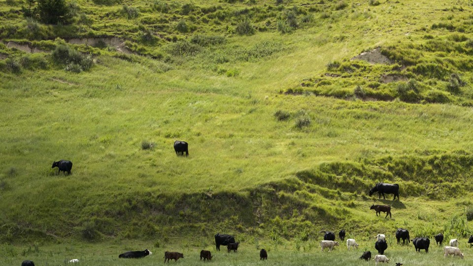 Extension study seeks ranchers' input on grassland conservation programs