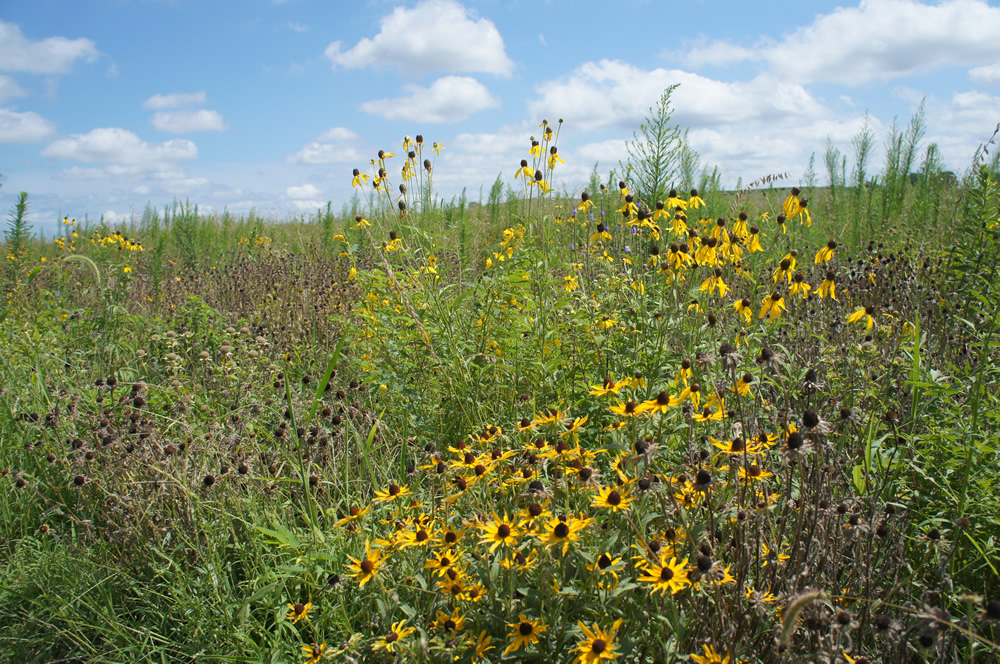 USDA issues $1.68 billion in CRP payments
