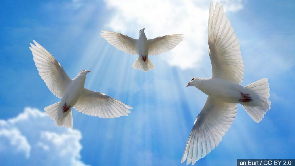 Dove hunting season opens Sept. 1 in Nebraska