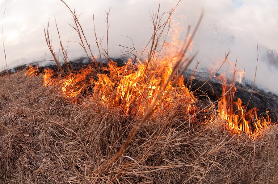 AUDIO: Brian Teeter Speaks to Cattlemen on Prescribed Burning