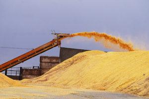 Coronavirus hits grain farmers hard in markets