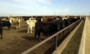 Nebraska Farm Bureau Statement Regarding Call for Moratorium on Nebraska Livestock Farms