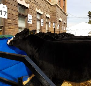 National Western Stock Show postponed until January 2022