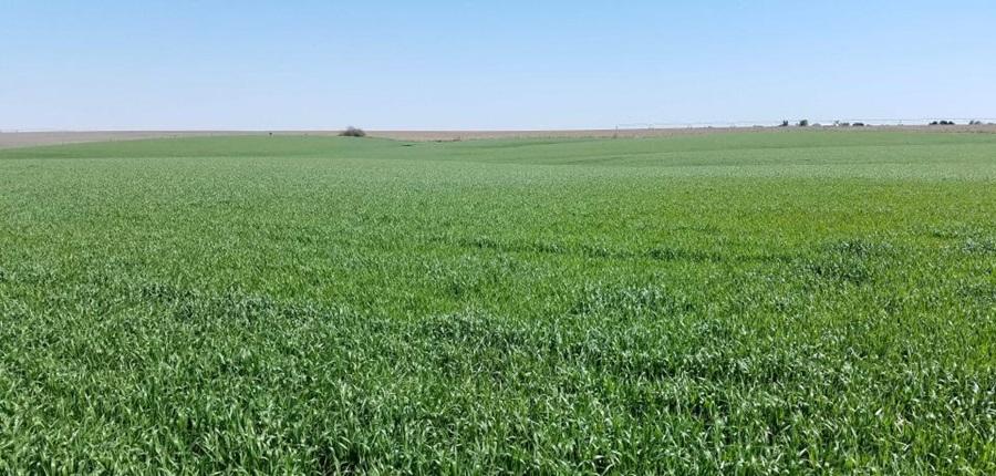 Kansas farmers make progress planting next year's wheat crop
