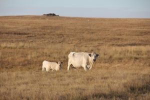 Improving the Bottom-line of Breeding: Three State Beef Conference