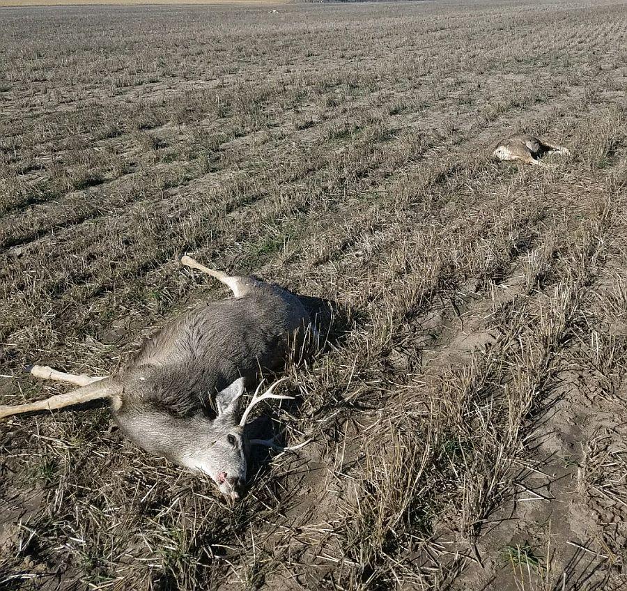 Information sought for illegal killing of mule deer