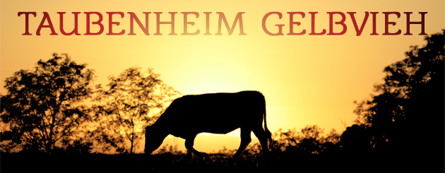 Taubenheim Gelbvieh