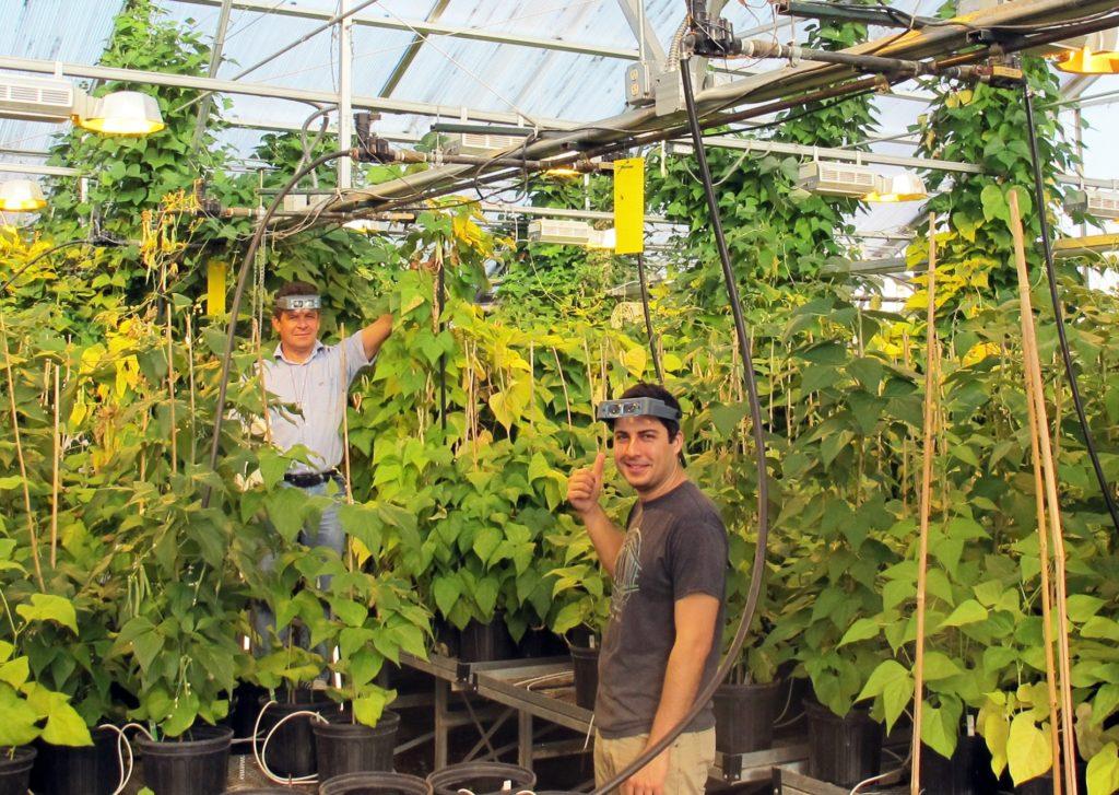 UNL extension breeding 800 dry edible bean varieties for studies