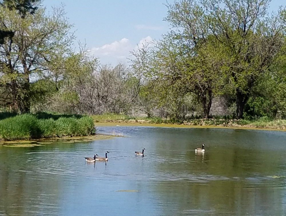 Commissioners approve waterfowl recommendations, two-tier duck bag limit