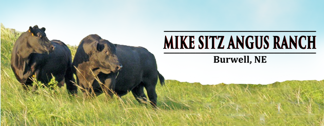 Mike Sitz Angus
