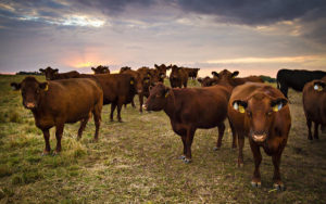 Panhandle Perspectives: Annual cow costs- the big three