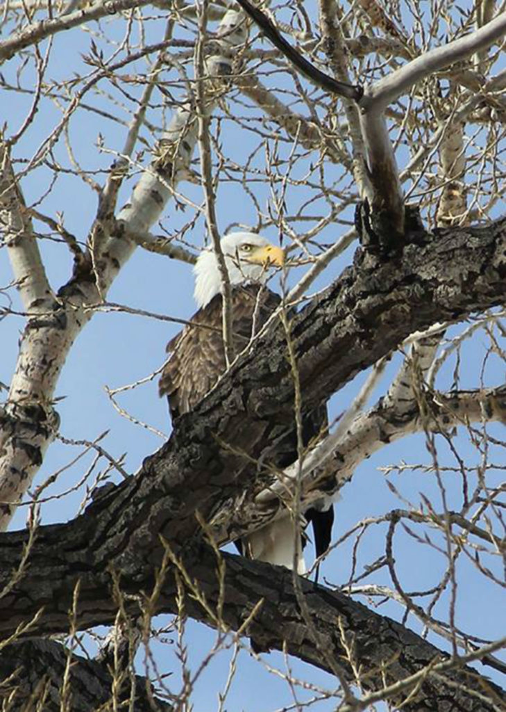 Central's Eagle Viewing Facilities Opening Soon
