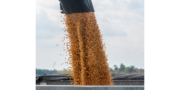 22 prizes awarded in Kansas Corn Yield Contest