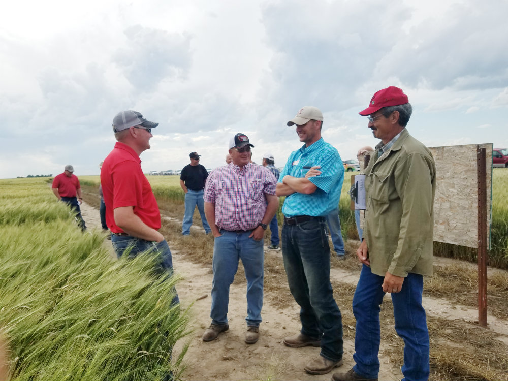 Field days, wheat variety tours in western NE will be self-guided or online events