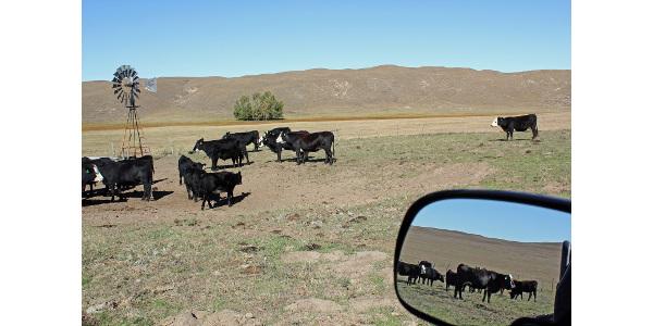 Choosing a calving season based on profitability