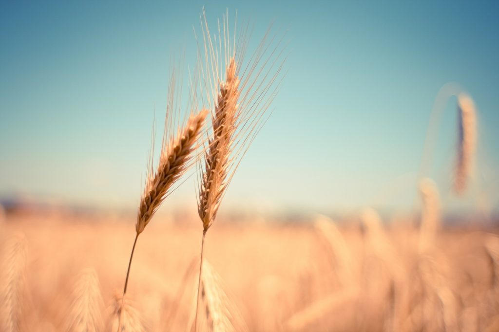 US wins WTO case against China over grain exports