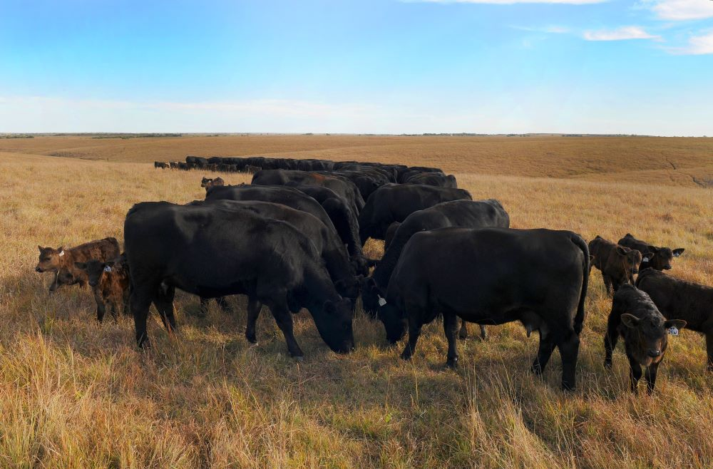 Researchers target cattle disease with USDA grant