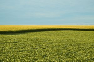 Quarterly webinar series to address land management issues