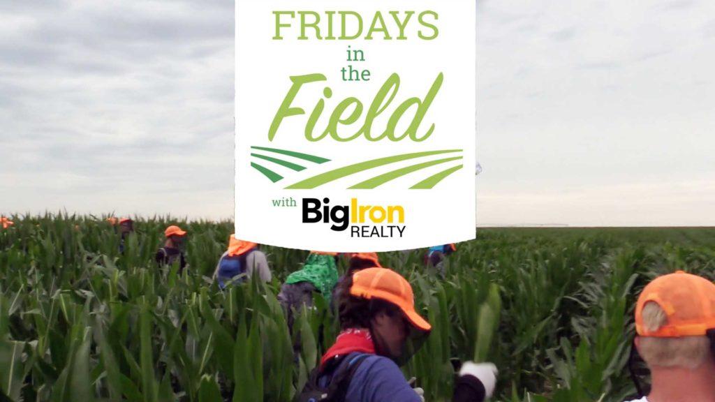 Detasseling underway in Nebraska – BigIron Realty's Fridays in the Field (July 26, 2019)