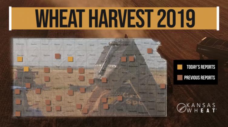 Day 11, Kansas Wheat Harvest Report