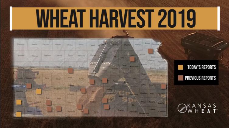 Day 6, Kansas Wheat Harvest Report