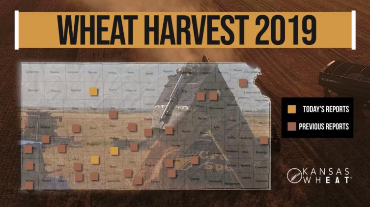 Day 9, Kansas Wheat Harvest Report