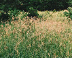 KDOT rejects suggestion it is to blame for bluestem invasion
