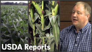 WASDE Report Increases Corn Production, Average National Yield