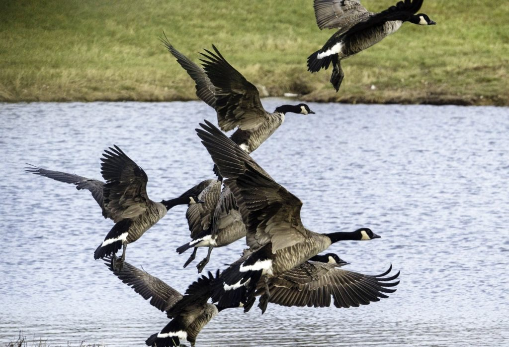 Migratory game bird hunters must register for HIP