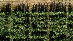 Gap Growing Between Irrigated, Rain-Fed Crop Yields