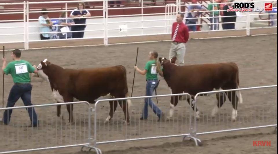 LIVE: Nebraska State Fair – FFA Market Beef Show (Sunday, Sept. 1, 2019)
