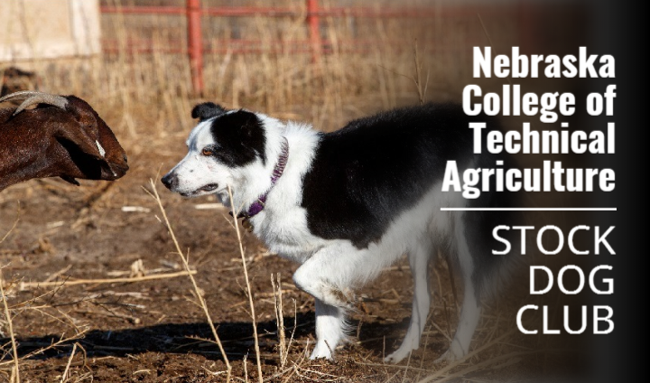 Nebraska College of Technical Agriculture Excels With Stock Dog Club