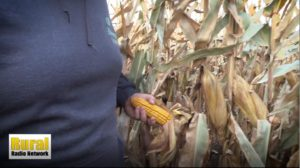 Harvest progress in eastern Nebraska - BigIron Realty's Fridays in the Field (10/18/19)