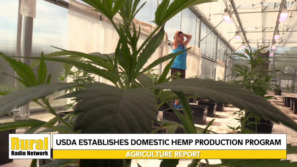VIDEO: USDA Releases Hemp Regulations – Agriculture News Update from the Rural Radio Network