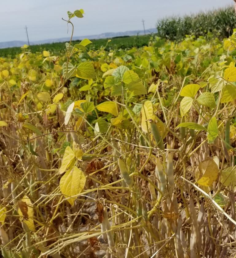 Weather plagues harvest in western Nebraska and eastern Wyoming