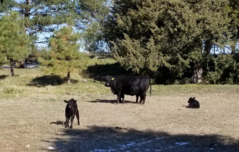 Nebraska Extension workshop deals with managing risk in cattle industry