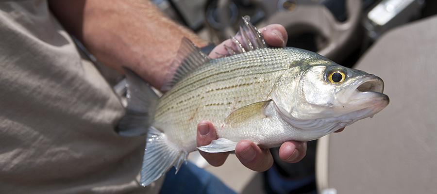 Commission adopts changes to sport fishing orders