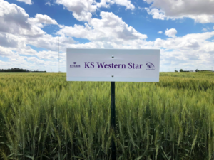 Vanier Family Donates $1 Million to Wheat Research Foundation