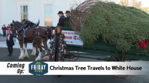 Christmas Tree Arrives at White House - Friday Five (Nov. 29, 2019)