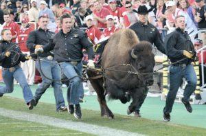 University of Colorado retires live buffalo mascot Ralphie V