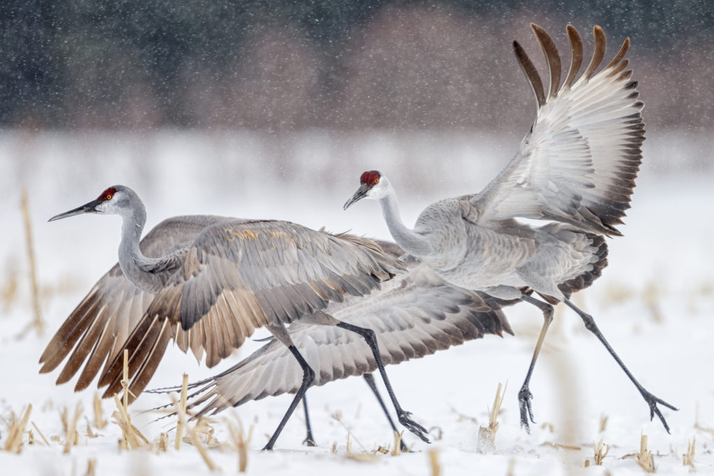 Crane Season Registration Opens on January 2