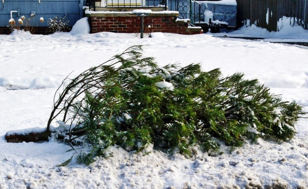 Scottsbluff and Gering Prepare For Annual Christmas Tree Pickup