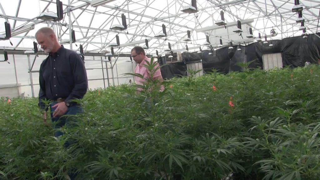 Western Farms Seed LLC Open House Showcases New Hemp Operation