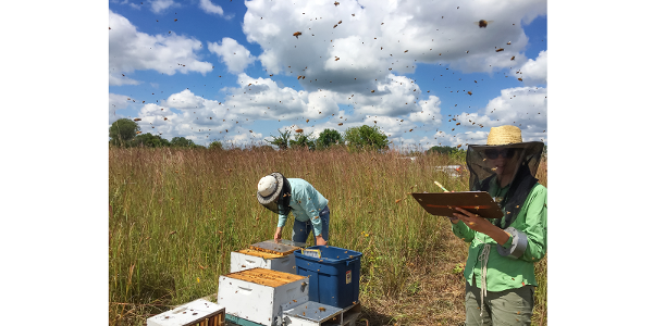 Insights on honey bee health in ag landscapes