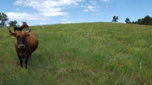 Nebraska Leopold Conservation Award Seeks Nominees