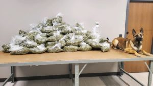 I-80 Traffic Stop In York County Yields Approximately 100 Pounds Of Marijuana